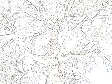 placentatree